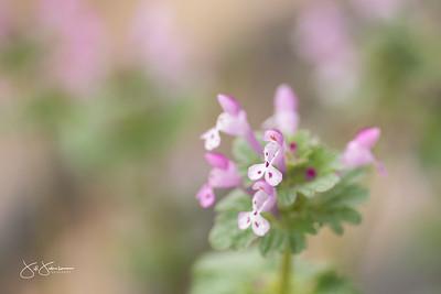 spring_flowers-3151