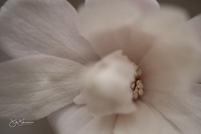 spring_flowers-3102