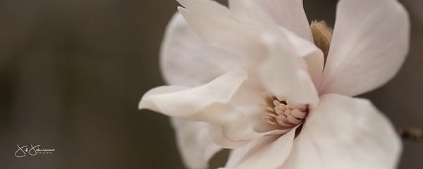 spring_flowers2-3188