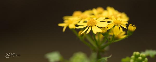 spring_flowers-3162