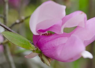 flowers-9486
