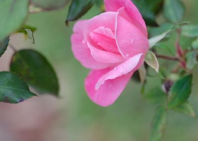 flowers-9466