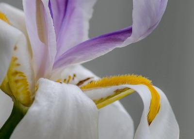 iris2-7693