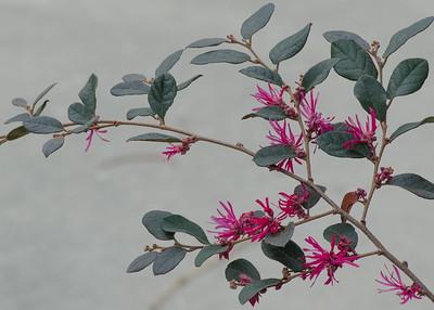 flowers-9496