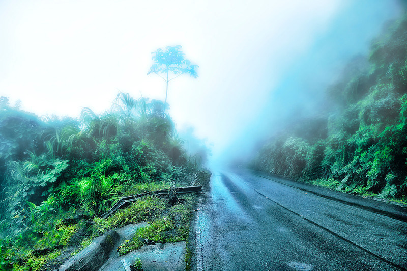 road in Rain forest, Costa Rica