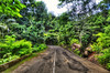 road via jungles in Seychelles