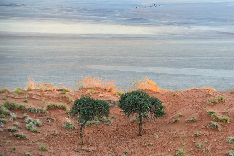 Once in Namib desert
