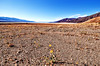 spring in Death Valley