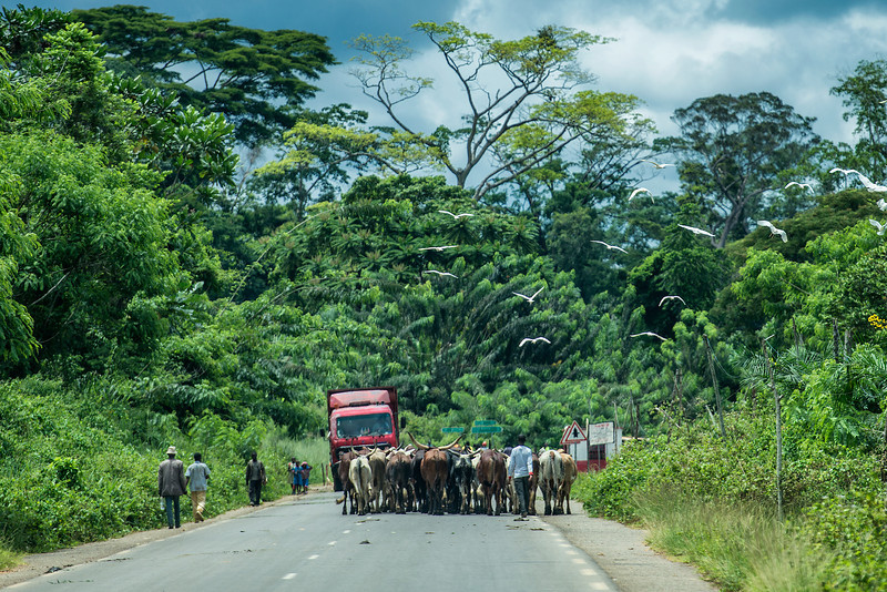 Driving from Yaouande to Gabon.