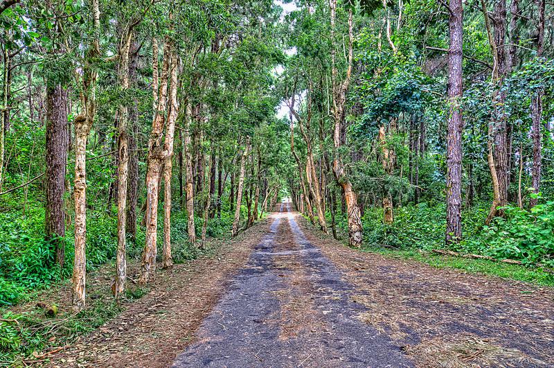 Old road in Mauritius