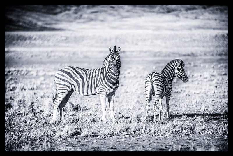 Africa in BW