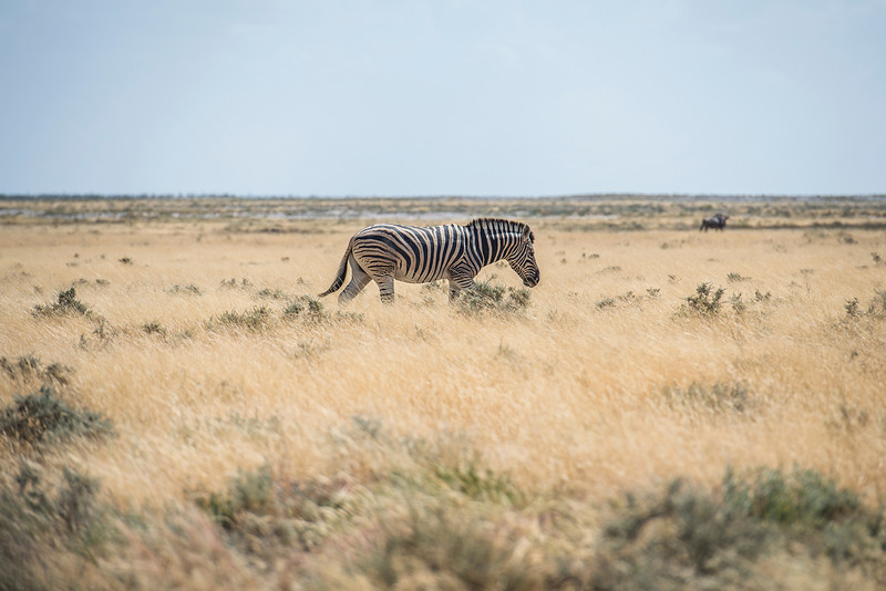 Lonely in Africa
