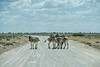 Road block in Namibia