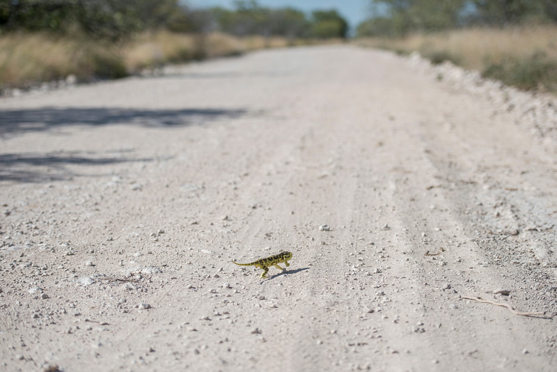 Lonely on the road. Namibia.