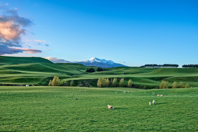 New Zealand. North Island.