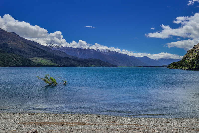Once in New Zealand