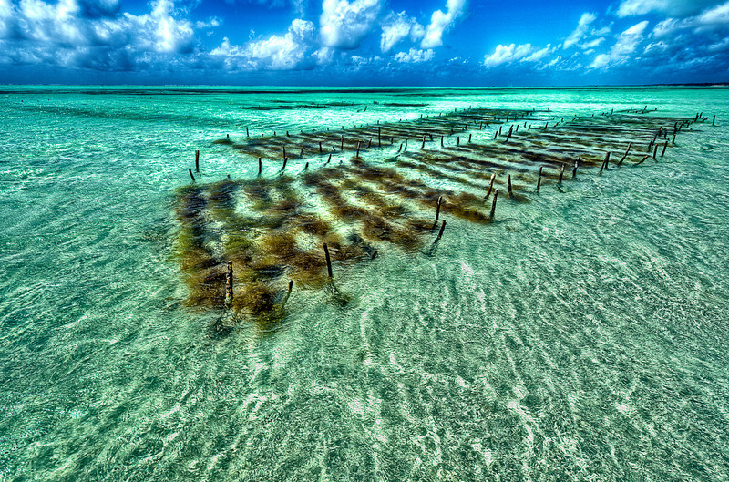 Locals use old method to catch some Ocean gifts.<br /> Hand made nets few miles from shore line. Zanzibar.
