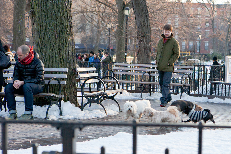 Dogs still find time to play at the Tompkins Square Dog Run