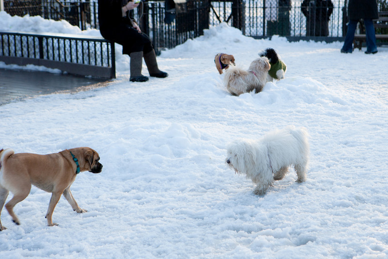 Even the dogs love playing in the snow... :)