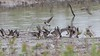 """Cliff Swallows <span class=""""spacer_LB_caption""""> • </span> <br> Heron Pond <span class=""""spacer_LB_caption""""> • </span> <br> Riverlands Migratory Bird Sanctuary <span class=""""spacer_LB_caption""""> • </span> <br> St. Charles County, Missouri <span class=""""spacer_LB_caption""""> • </span> <br> 2021-05-16 <br><span class=""""showLBtitle""""> &nbsp; &nbsp; &nbsp; &nbsp; &nbsp; &nbsp; &nbsp; &nbsp; &nbsp; &nbsp; &nbsp; &nbsp; &nbsp; &nbsp; &nbsp; &nbsp; &nbsp; &nbsp; &nbsp; &nbsp; &nbsp; &nbsp; &nbsp; &nbsp; &nbsp; &nbsp; &nbsp; &nbsp; &nbsp; &nbsp; &nbsp; &nbsp; &nbsp; &nbsp; &nbsp; &nbsp; &nbsp; &nbsp; &nbsp; &nbsp; &nbsp; &nbsp; &nbsp; &nbsp; </span>  <center> <span class=""""noShowSmart""""> <a href=""""/MyKeywords/Bird-Videos/i-DrFsVZW/A""""> <span style=""""color:yellow"""">Click here to open video in lightbox/full screen</span></a> </span>  <span class=""""noShowGallery""""> <a href=""""/Birds/2021-Birding/Birding-2021-May/2021-05-16-Riverlands-Migratory-Bird-Sanctuary/i-DrFsVZW/A""""> <span style=""""color:yellow"""">Click here to open video in lightbox/full screen</span></a> </span><br> </center>"""