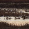 "Heron Pond  <br> Riverlands Migratory Bird Sanctuary <br> 2017-11-25 4:48pm <br>  <span class=""noShowSmart""> <a href=""/MyKeywords/Bird-Videos/n-gF9bt/i-bt4T2Kh/A""> <span style=""color:yellow"">Click here to open video in lightbox/full screen</span></a> </span>  <span class=""noShowGallery""> <a href=""/Birds/2017-Birding/Birding-2017-November/2017-11-25-Riverlands-Migratory-Bird-Sanctuary/i-bt4T2Kh/A""> <span style=""color:yellow"">Click here to open video in lightbox/full screen</span></a> </span>"