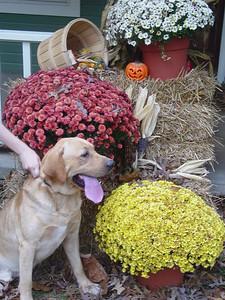 Thanksgiving & Fall Display 2004
