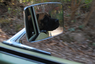 Tallulah in the side mirror.