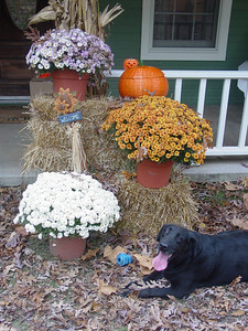 Thanksgiving & Fall Display 2004