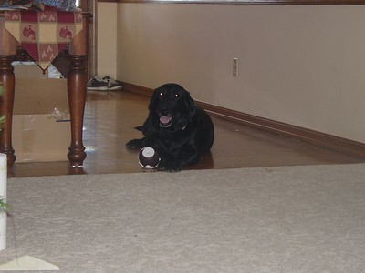 Faith lays in the hall with her Christmas cupcake.