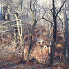 """Let's play """"count the deer."""""""