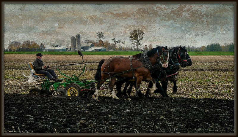 Real ploughing with real horses, with a surrealistic treatment.
