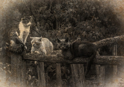 Grungy feral cats take a break.