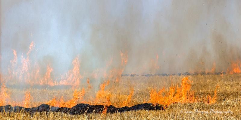 Stubble Fire