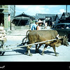 Ox carts such as this were common sights in Taiwan in 1954.