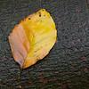 Autumn Textures