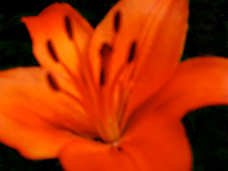 Abstract Tigerlilly-1