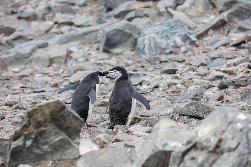 Antarctica-320
