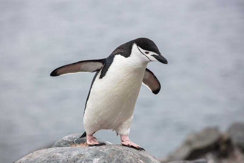 Antarctica-327