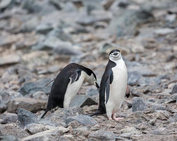 Antarctica-332