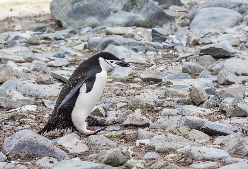 Antarctica-314