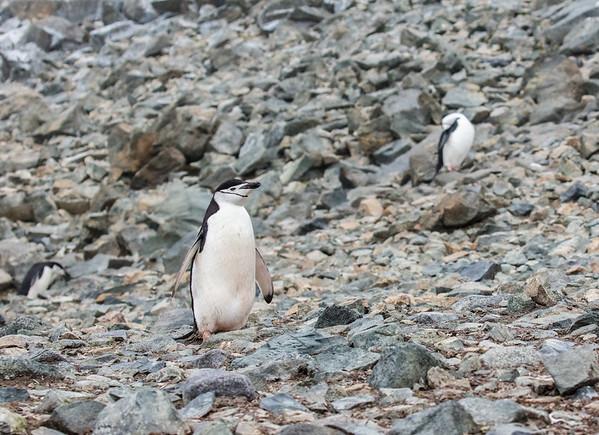 Antarctica-315