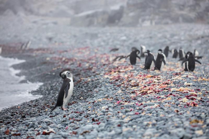 Antarctica-339