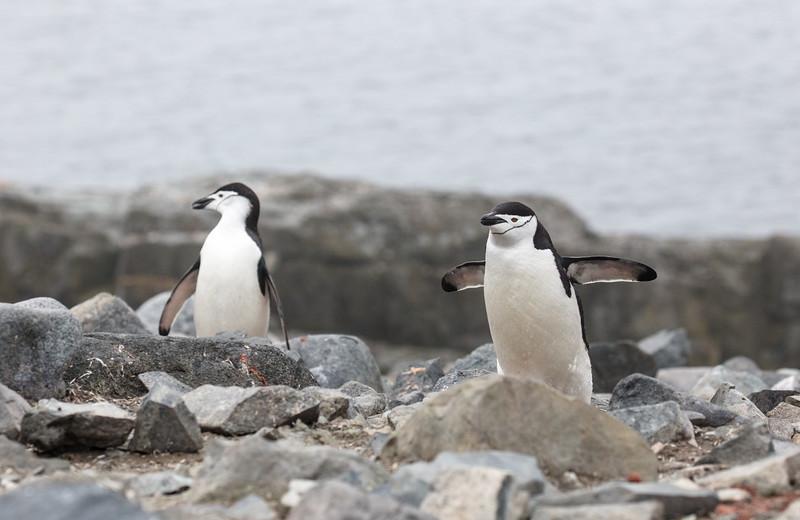 Antarctica-324