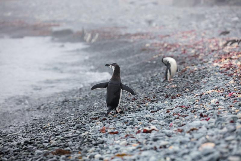 Antarctica-338