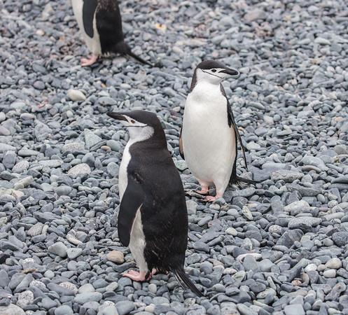 Antarctica-337