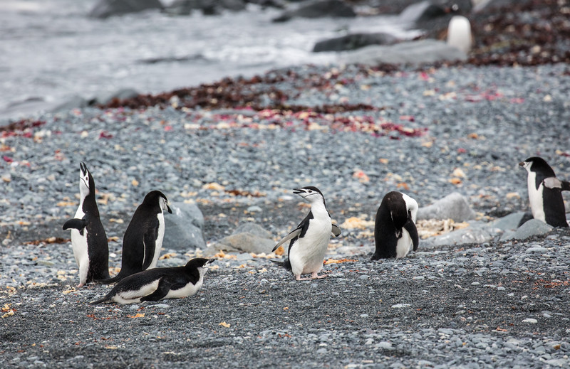 Antarctica-308