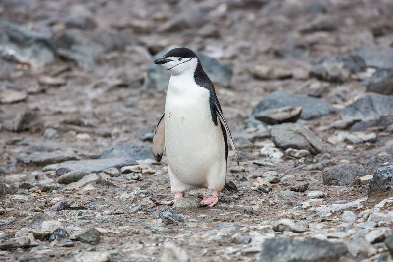 Antarctica-318