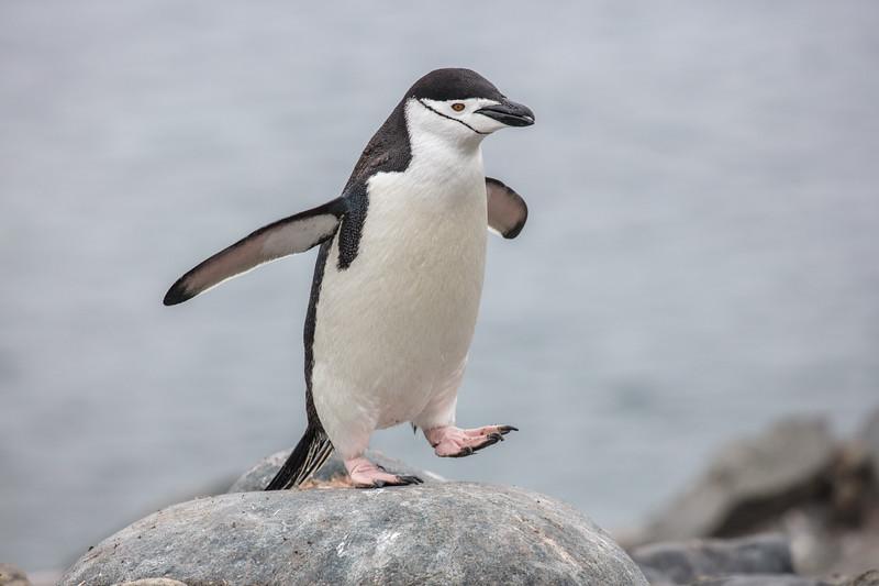 Antarctica-326