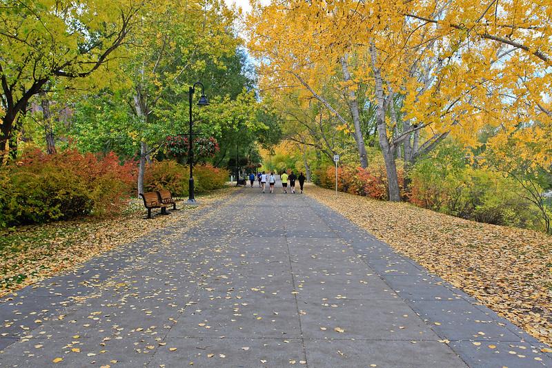 Calgary Prince's Park Fall 2010-13