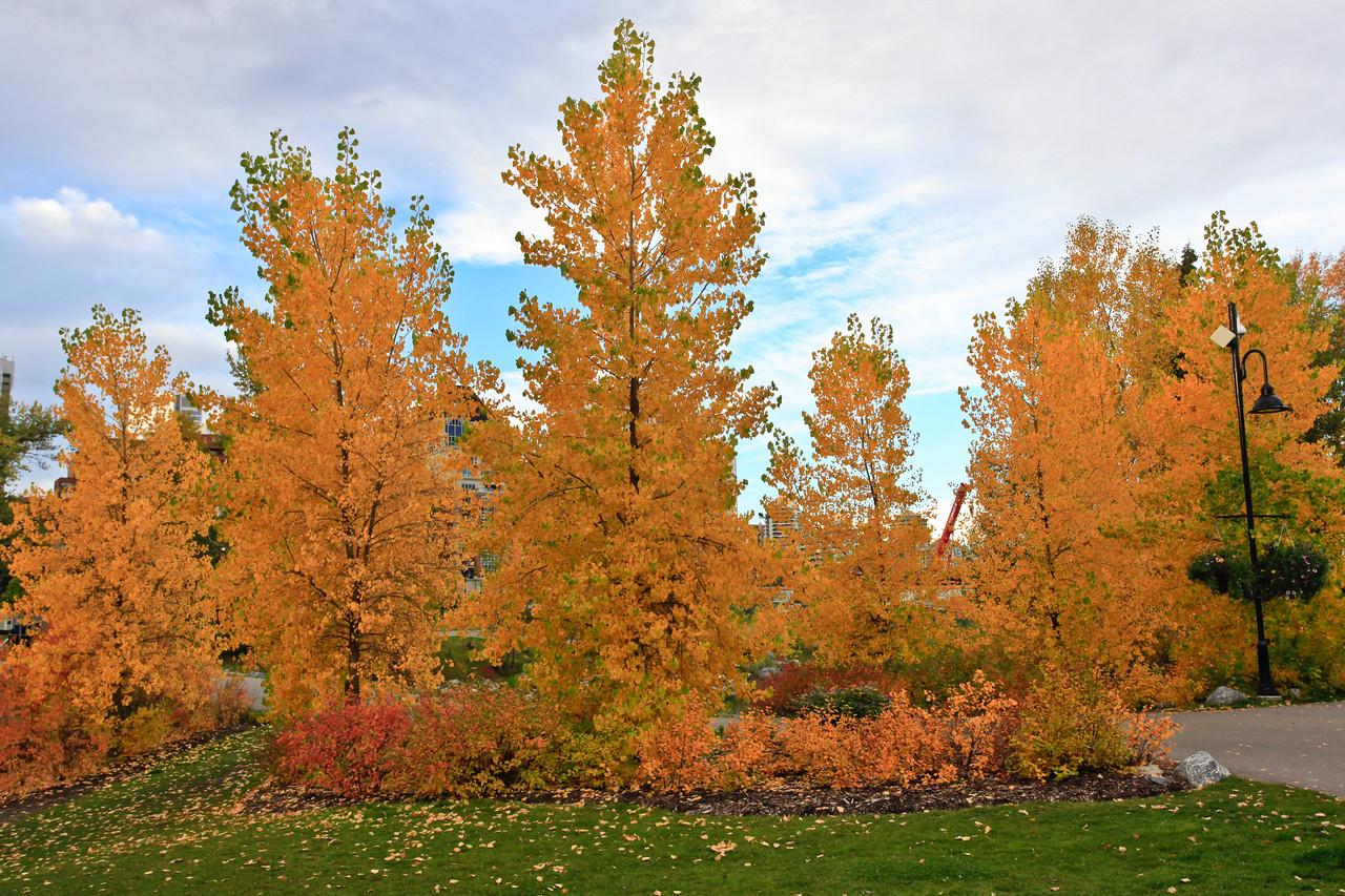 Calgary Prince's Park Fall 2010-2